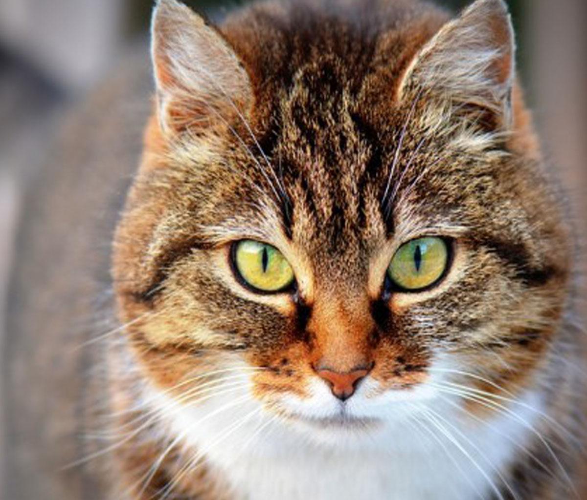 تفسير رؤية القطة في المنام