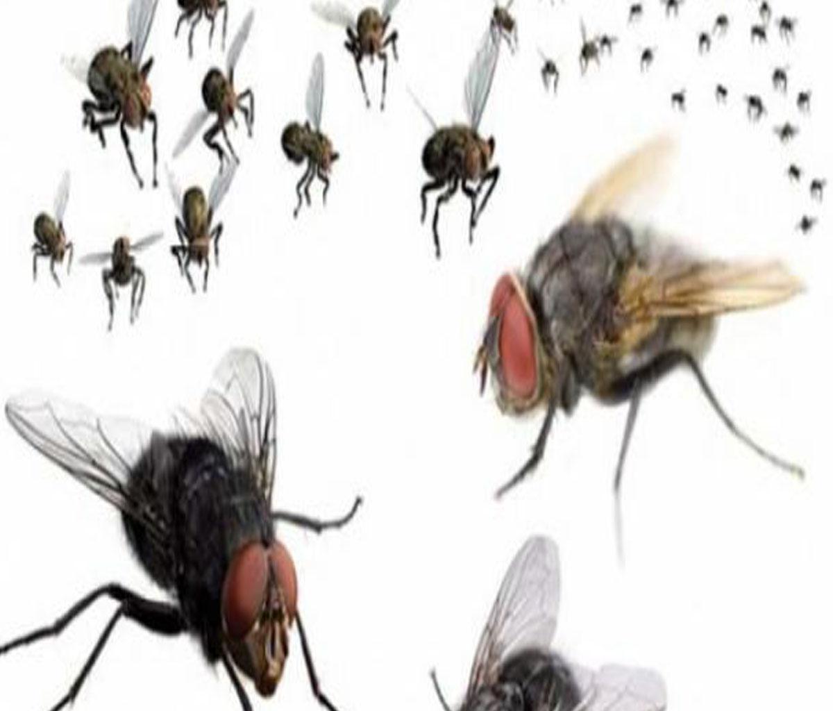 تفسير رؤية مطاردة الذباب في المنام