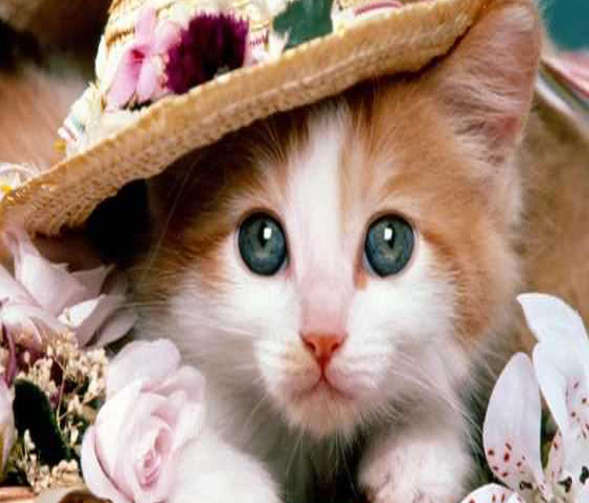تفسير حلم القطة في منام المتزوجة