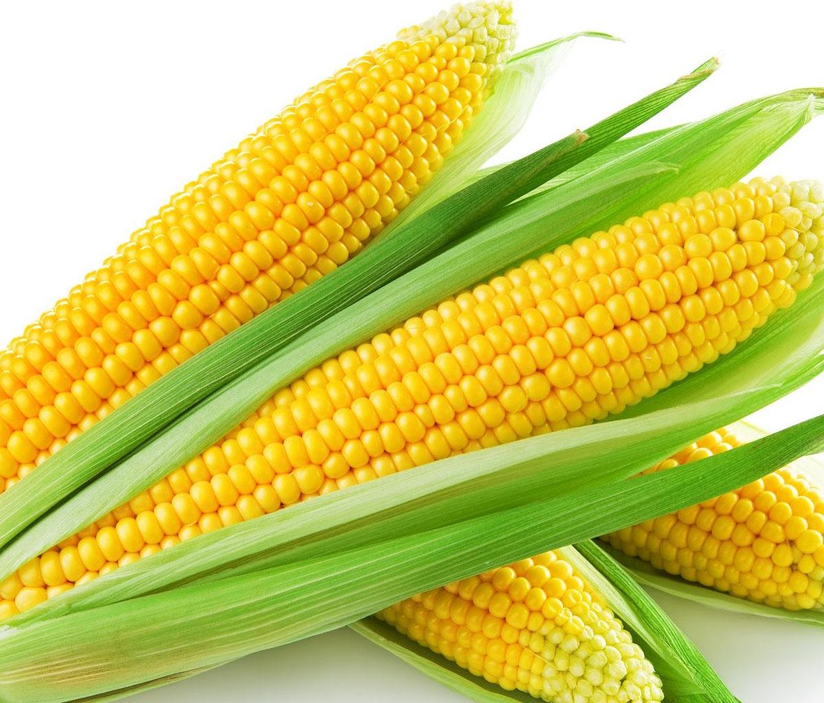 تفسير حلم تناول الذرة للحامل