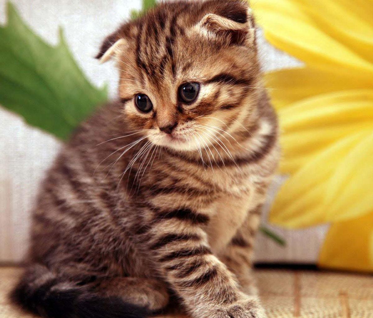 تفسير حلم القطط للحامل في المنام