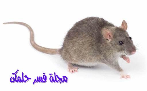 حلم الفأر للمرأة المتزوجة في المنام لابن سيرين