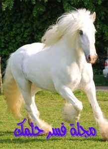 حلم الحصان الأبيض للبنت العزباء والمتزوجة في المنام لابن سيرين