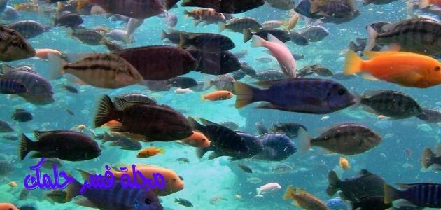 تفسير رؤية شراء السمك في المنام