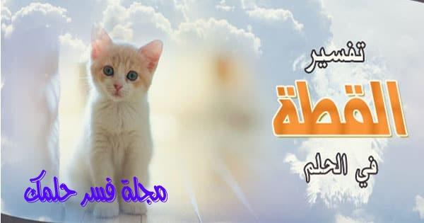 حلم القطط البيضاء في المنام لابن سيرين