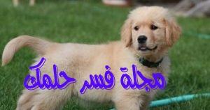حلم الكلب للبنت العزباء في المنام لابن سيرين