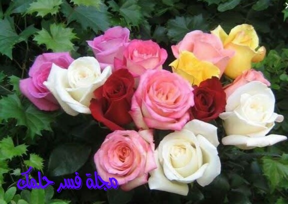 تفسير حلم الورود في المنام للرجل والمرأة المتزوجة والعزباء احلامي