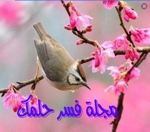 تفسير حلم رؤية العصافير في المنام