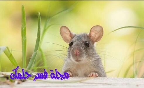 تفسير حلم رؤية الفأر في المنام للمرأة المتزوجة