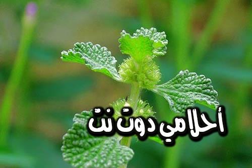 تخلص من مشاكل الرئة والسعال بهذهِ الأعشاب