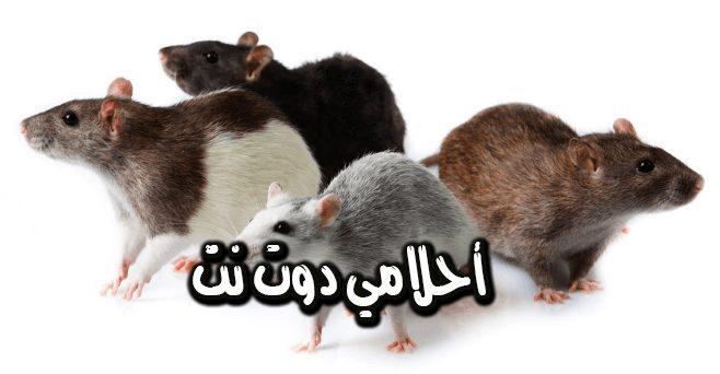 تفسير حلم خروج الفئران من البيت بالمنام للبنت العزباء والمتزوجة