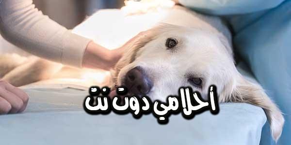 فواكه يمكنها علاج داء الكلب بسهولة ومتوفرة في الأسواق