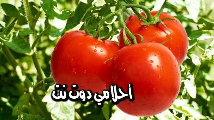 تفسير رؤية تناول ثمار نبات الطماطم في المنام