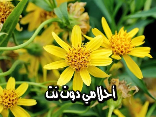 هذهِ الاعشاب تستخدم في الاسعافات الاولية تعرف عليها