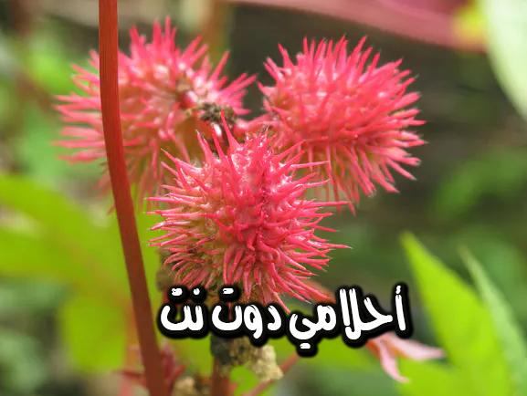 نباتات قاتلة اعرفها الان وحذر غيرك منها