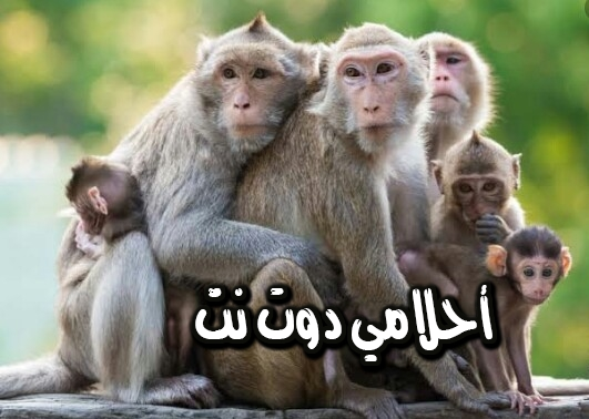 تفسير رؤية القرود في المنام