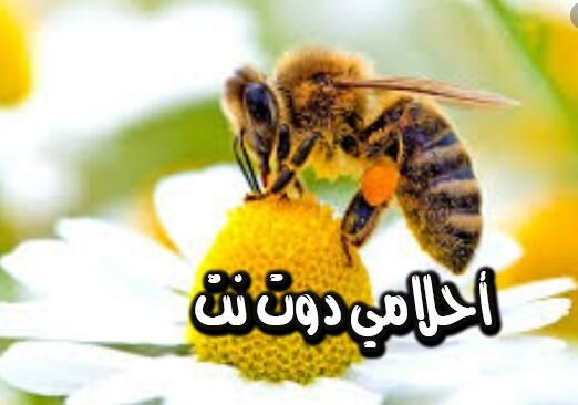 تفسير رؤية خلايا النحل في المنام