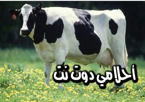 تفسير رؤية نطحة البقرة في المنام