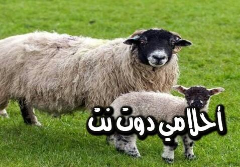 تفسير رؤية تضحية العيد في المنام