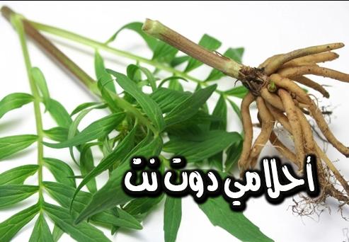 علاج عسر الهضم و التوتر الان بهذا النبات فقط