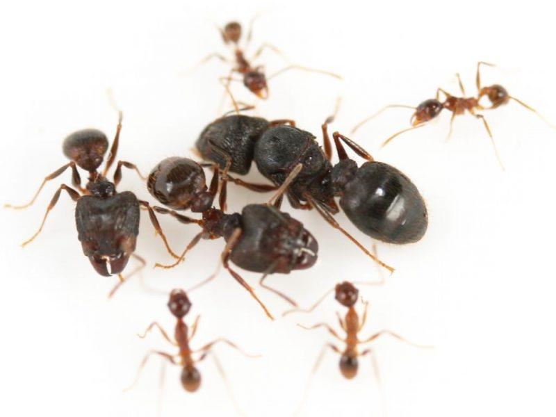 تفسير رؤية حشرات النمل في المنام