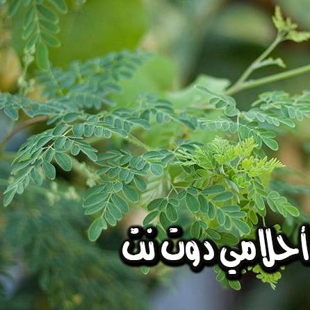 هل تعرف ماهي شجرة المعجزة وفوائدها الخيالية؟