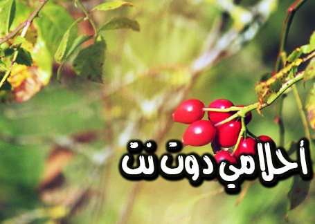 الأمراض التي يحمي منها عشب ثمر الورد