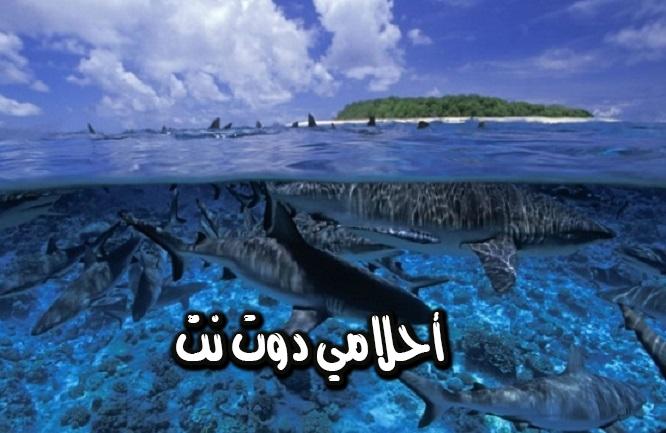 جزيرةحلقية بيكيني