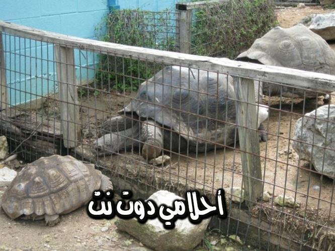 حديقة حيوان أوستن