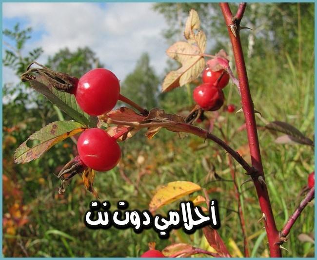هذا النبات ينظف الدم ويعالج امراض السرطان