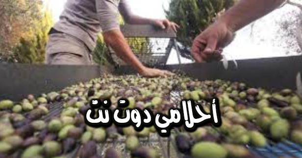 استخدام بذور الزيتون