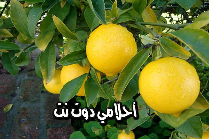 فوائد لا تعرفها عن بلسم الليمون