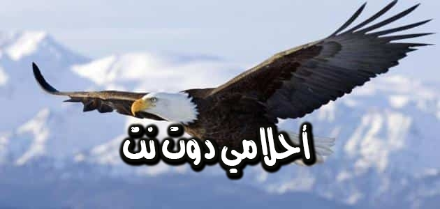 تفسير رؤية طائر النسر في المنام