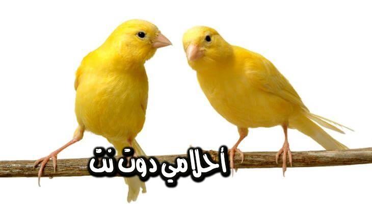تفسير و معنى الطيور في المنام اكل طير في المنام الحكي مع الطيور في الحلم اكل عصفور