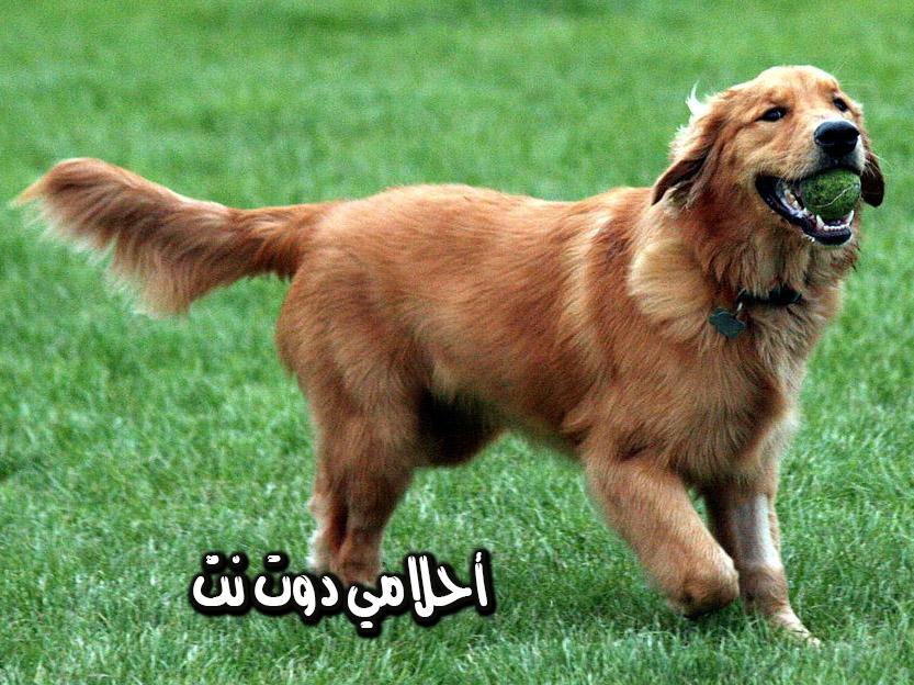شراء كلب في المنام