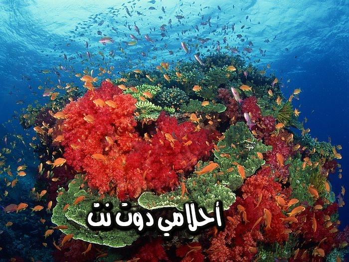 تفسير حلم المرجان