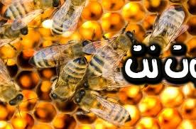 تفسير رؤية النحل في المنام