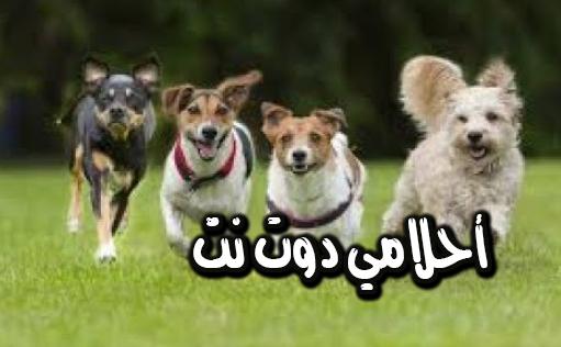 تفسير رؤية براز الكلاب في المنام