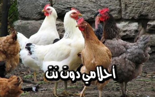 تفسير رؤية الدجاج في الحلم تفسير الدجاج الابيض في المنام تفسير رؤية دجاج في المنزل