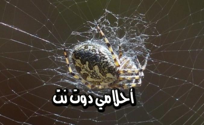 تفسير رؤية خيوط العنكبوت في المنام