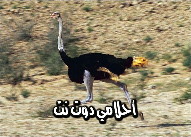 تفسير رؤية طائر النعامة في المنام