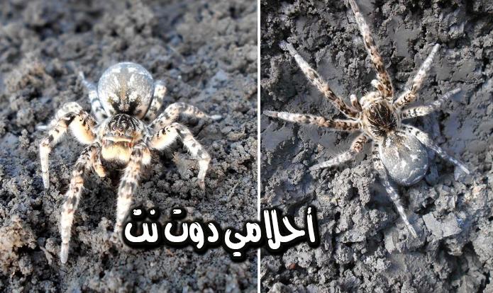 تفسير حلم اطعام العنكبوت في المنام – تفسير حلم بيت العنكبوت