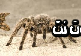 تفسير حلم العنكبوت الصغير في المنام
