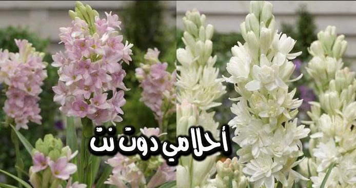 طريقة ازالة الروائح السيئة والعرق والتوتر والقلق والاسهال والسعال في هذه النبتة السحرية