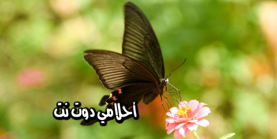 الفراشة السوداء في المنام