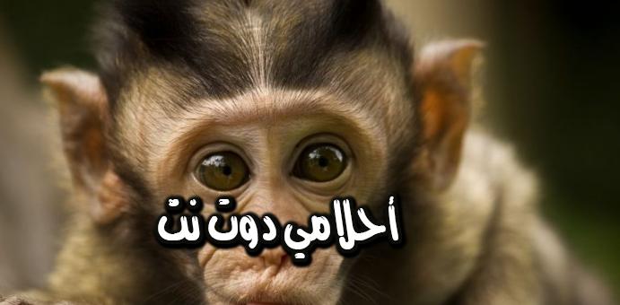 القرد في المنام تفسير الامام الصادق