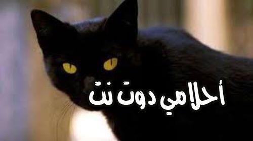 على ماذا يدل القط الاسود في المنام ؟