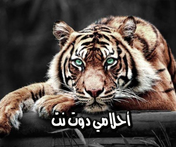 تفسير رؤية النمر في المنام