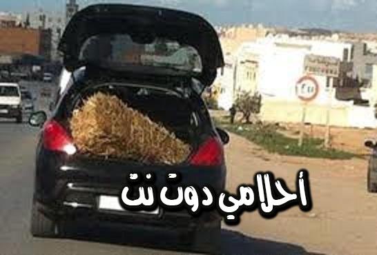 طلب الإفراج عن سيارة أو مركب صيد بحري في قطر