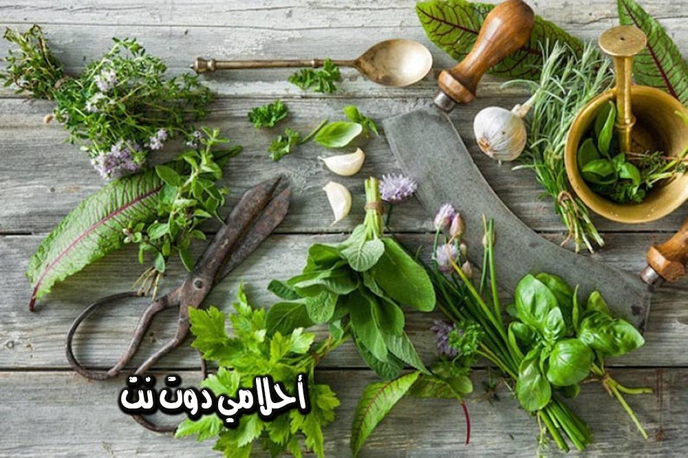 علاج الكلى بالأعشاب
